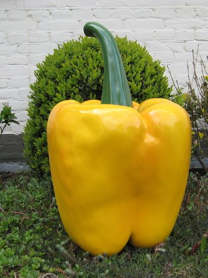 Paprika geel 70cm €73.=