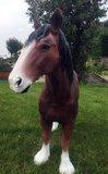 tinker bruin paard beeld