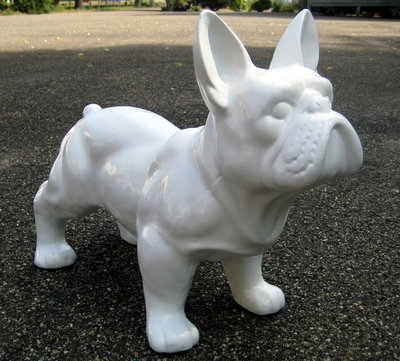 Franse bulldog wit 50cm