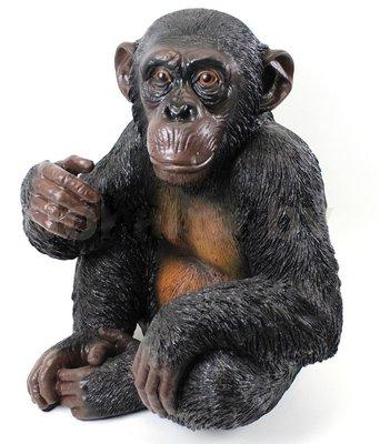 Zittende chimpansee