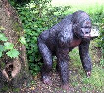 gorilla bokito aap