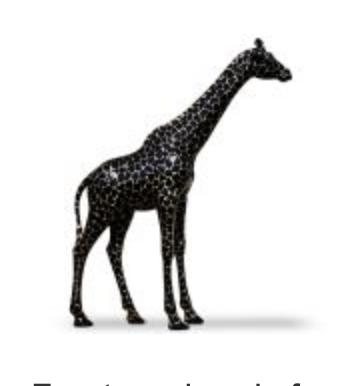 Giraffe kunstbeeld levensgroot zwart goldline 330cm