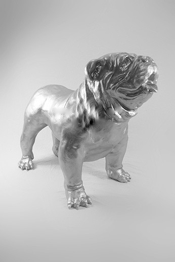 Engelse  bulldog Spike zilver