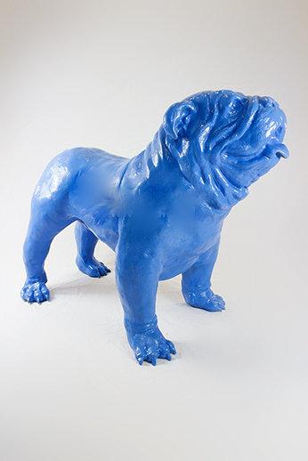 engelse bulldog Spike blauw