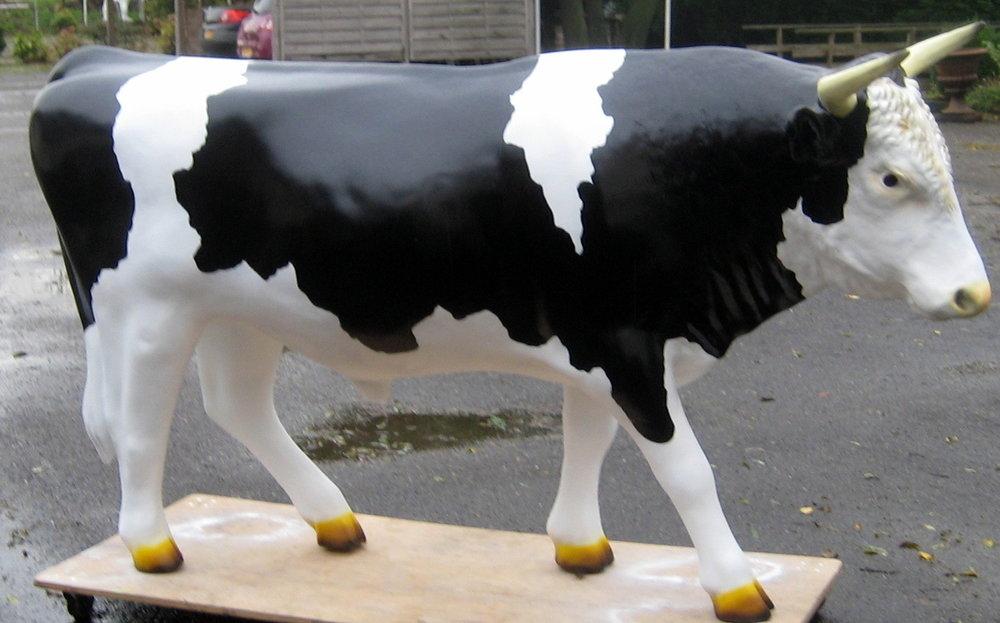 Levensgrote stier - zwart bont