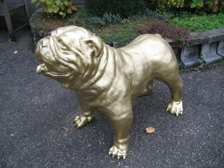 engelse bulldog Spike  goud kleur