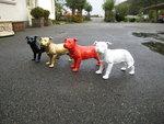stafford hond bull terrier
