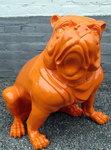engelse bulldog  oranje hoogglans