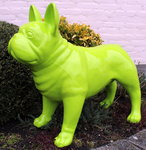 franse -bulldog-groen