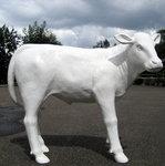 koe wit