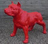 stafford dog