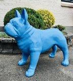 franse bulldog blauw