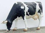 polyester koe