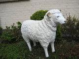 kunst beeld schaap