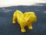 lse bulldog-ceasar-geel