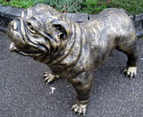 engelse bulldog gebronsd