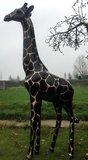 Giraffe 205cm -kunst beeld- golddigger