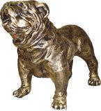 engels bulldog