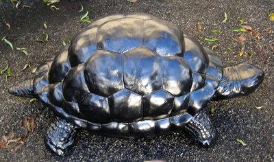 Schildpad XL Galapagos 110x57cm