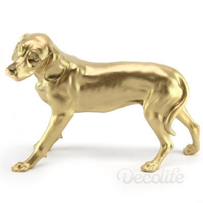 Dalmatier - staand-goud