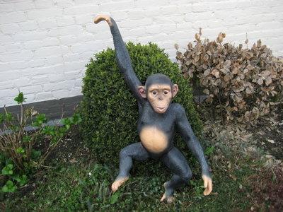 Aap Chimpansee hang aap