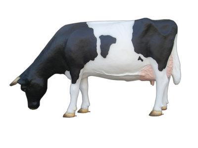 Levensgrote grazende koe