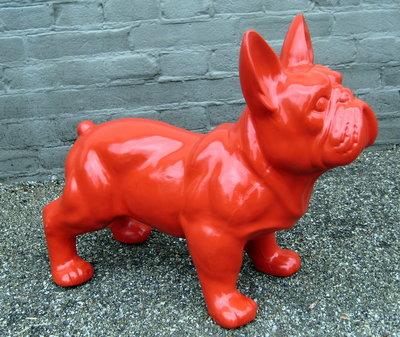 franse bulldog  hoogglans 50x37cm  rood