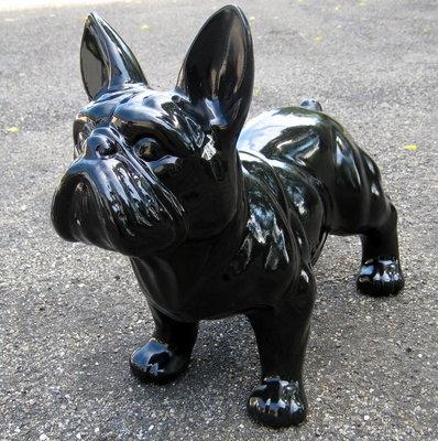 franse bulldog  hoogglans 50x37cm  zwart