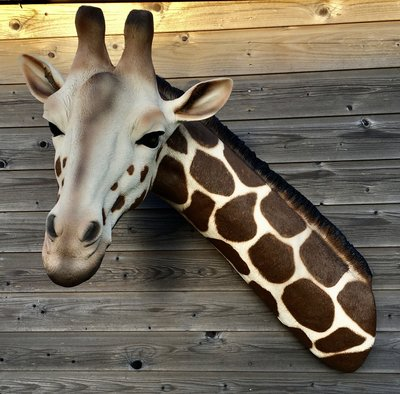 Giraffe kop  kunstbeeld levensgroot