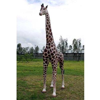 Giraffe kunstbeeld levensgroot