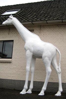 Giraffe kunstbeeld levensgroot wit  330cm **