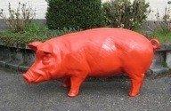 Spaarvarken  enveloppen varken rood