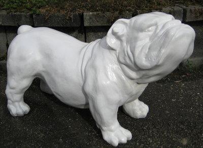 engelse bull dog  Ceasar- polyester -kunst- wit-hoogglans
