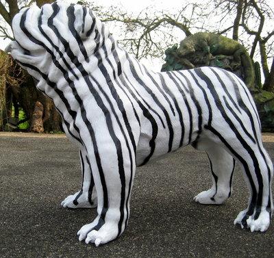 Engelse bulldog kunst-Zebra-design