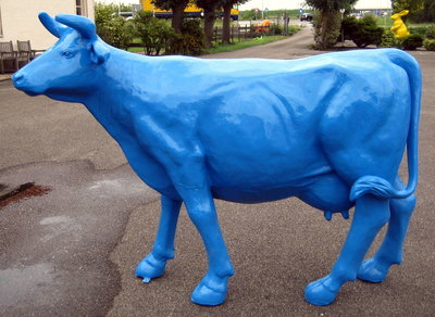 Levensgrote koe