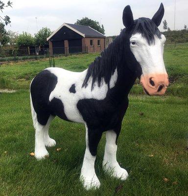 Tinker paard zwartbont