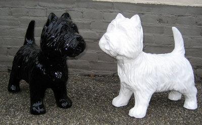 Black&White westie honden beelden per paar