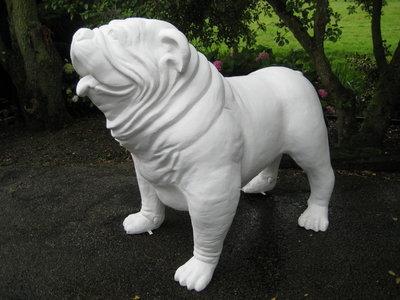 Engelse Bulldog XXL