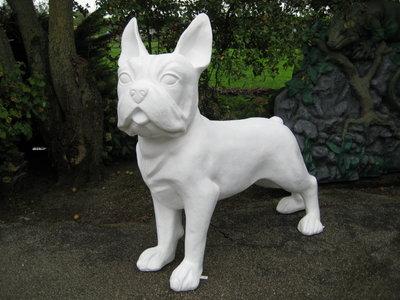 Franse Bulldog  200cm