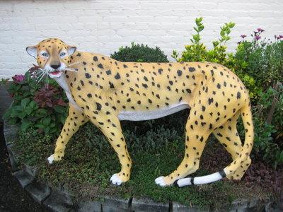Cheeta- jachtluipaard -Beeld
