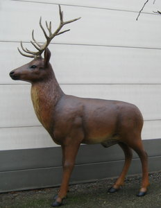 hert-rendier-longhorn