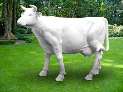 witte koe