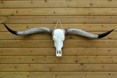 Longhorn Schedel Decolife De Polyesterbeelden En Decoratie Webshop